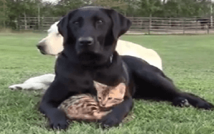 dog.cat_.hug_